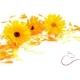 Nechtík lekársky kvet s kalichom 15g