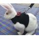 Vodítko a nastaviteľný postroj na suchý zips pre zajačika